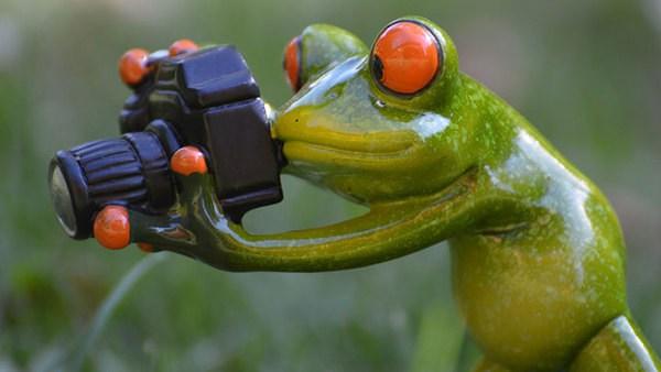 Kostenlos frosch bilder Frosch Malen